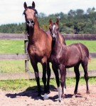 Aida with filly Amurah