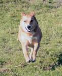 Erni Guarddog No. 2